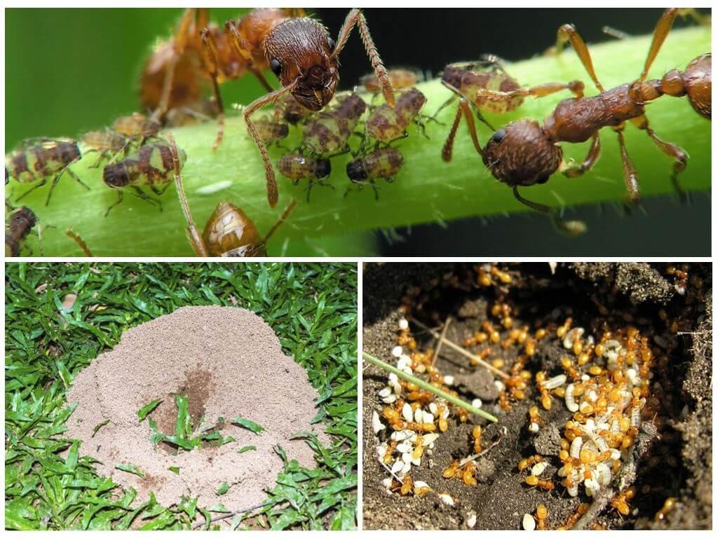 6 способов избавиться от муравьев на деревьях в саду
