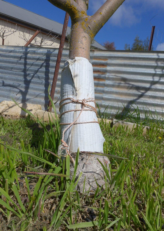 Как очистить сад от плодожорок? как избавиться? методы борьбы. фото — ботаничка.ru