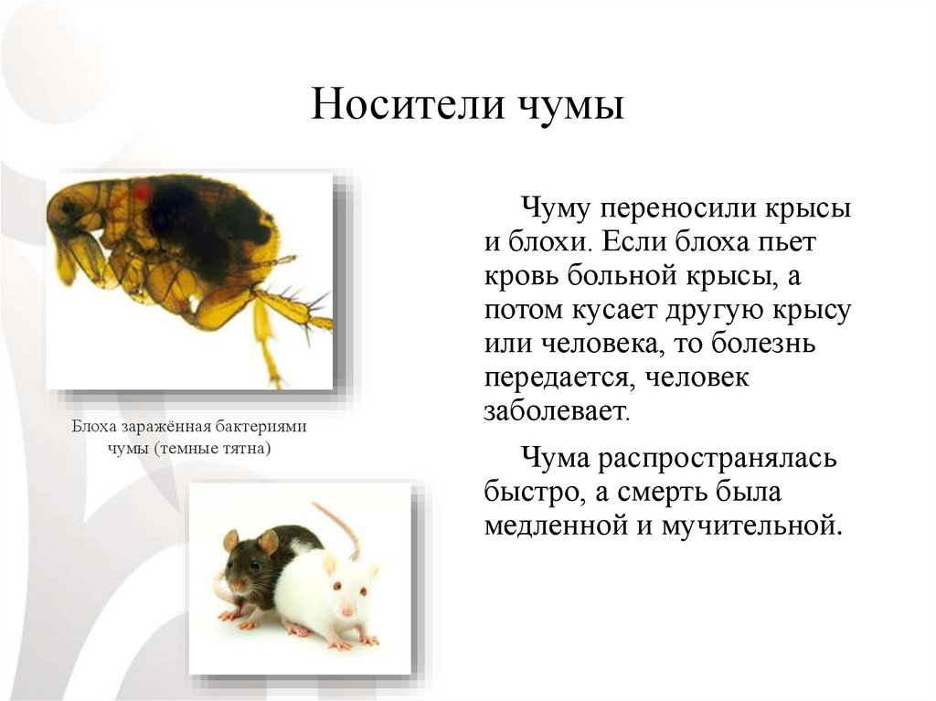 Какие болезни и инфекции передаются грызунами (крысами и мышами)