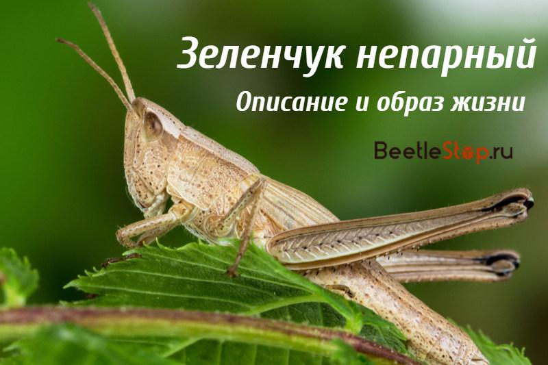 Половая система насекомых | справочник пестициды.ru
