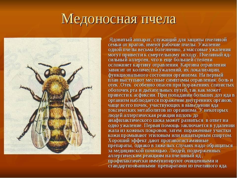 Пчеложук пчелиный: внешний вид и как избавиться от насекомого