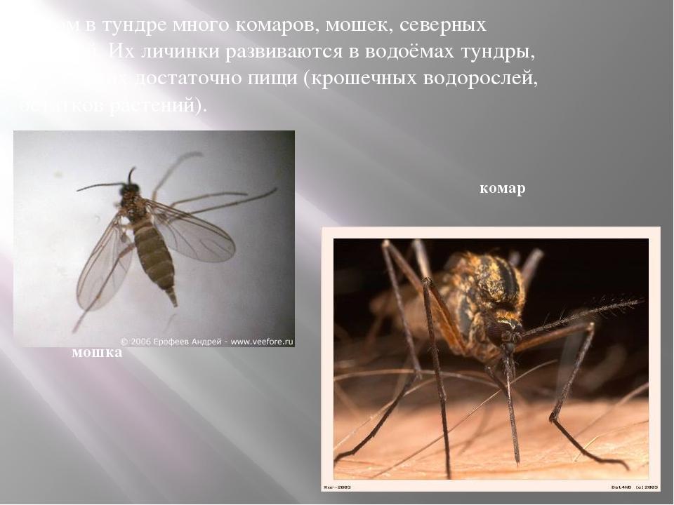 Существуют ли места на земле, где нет комаров?