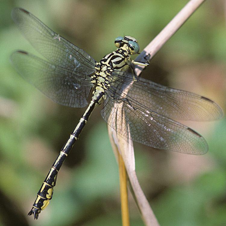 Обзор спиралей от комаров - отзывы, описание и правила использования