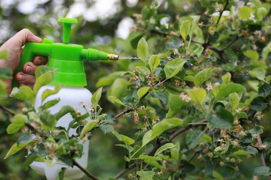 Как бороться с вредителями жимолости в саду