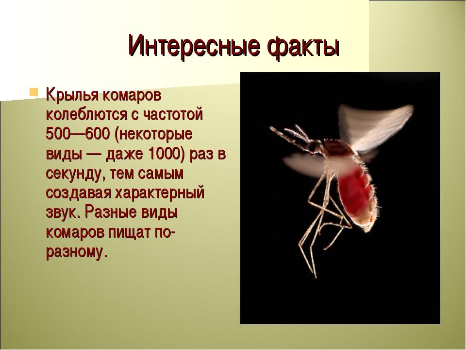 Всё о строении комара