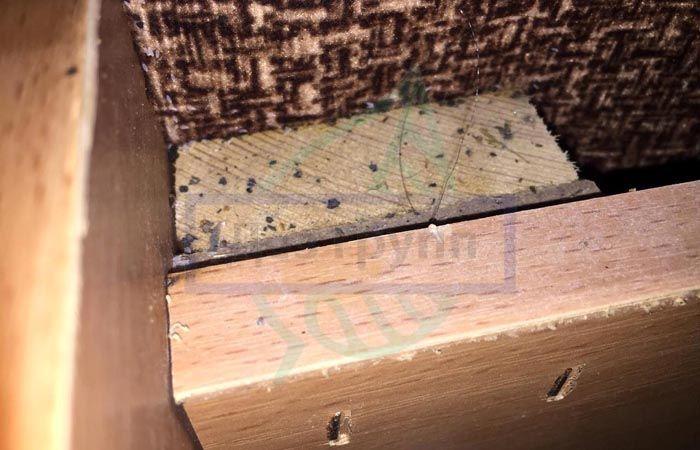 Мебельные клопы: как быстро вывести клопов из дивана самостоятельно