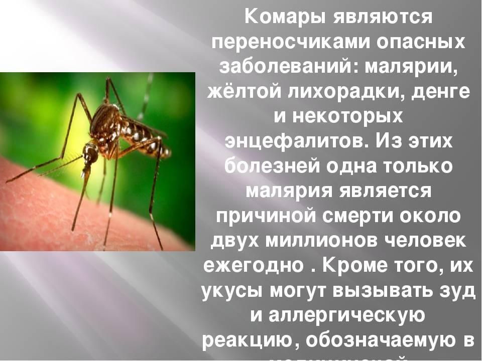 Чем большой комар отличается от маленького: отличия и особенности. москиты: фото и описание опасного человеческого врага