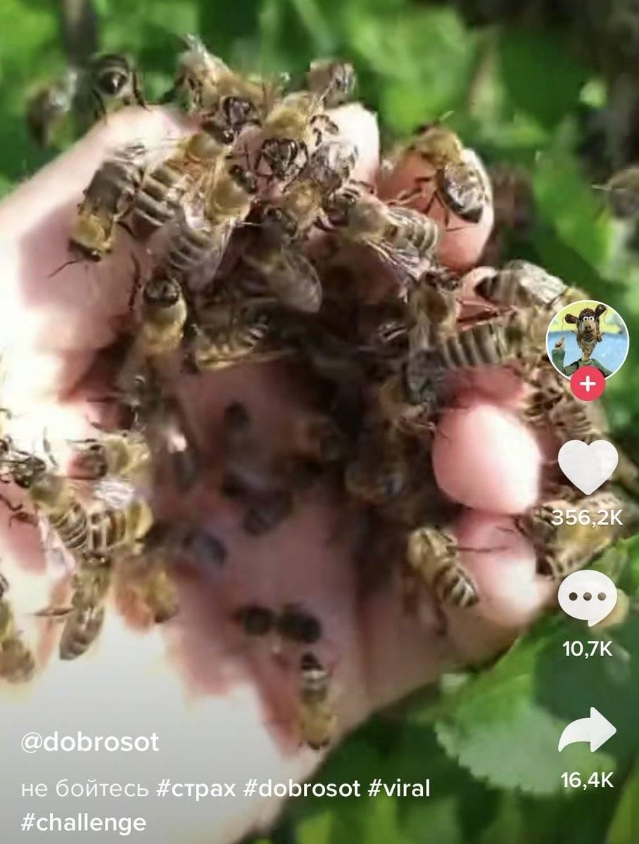 Как избавиться от пчел на даче, в стене и под крышей: самые эффективные средства