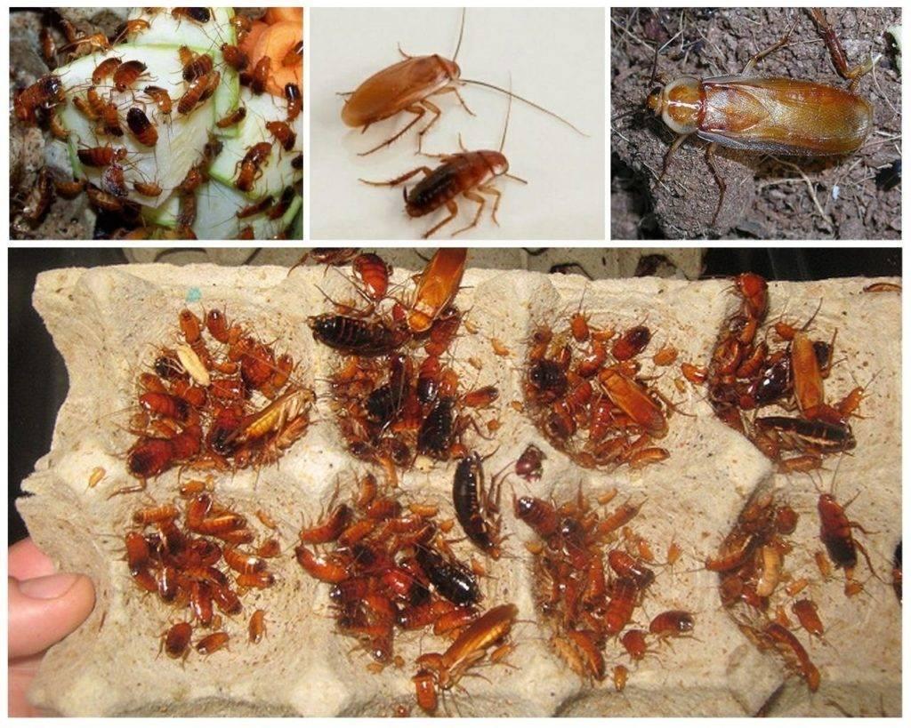 Как избавиться и вывести тараканов из холодильника