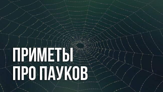 Чем питаются и что едят пауки в доме