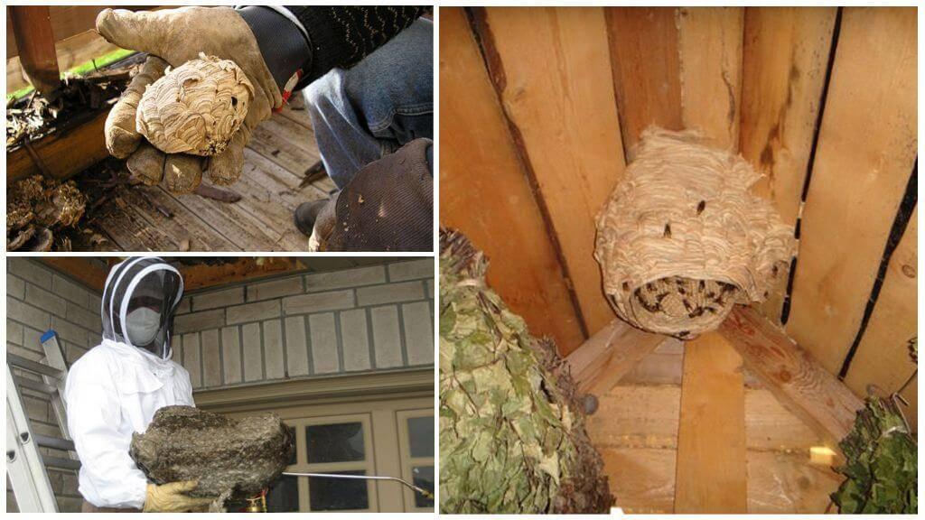 Избавиться от ос в доме или на даче — возможно!