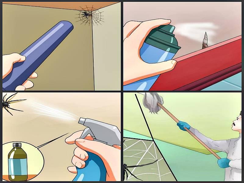 Как избавиться от пауков в квартире, частном доме навсегда