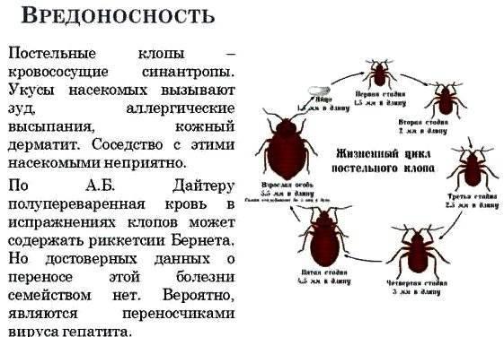 Опасность тараканов для здоровья человека: 5 главных болезней