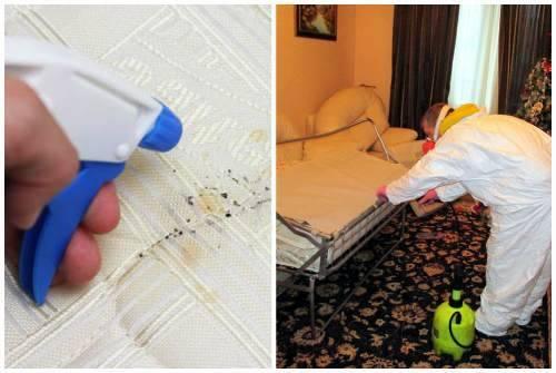Что делать если в квартире появились клопы? что предпринять, если ребенка покусали или соседи травят вредителей?