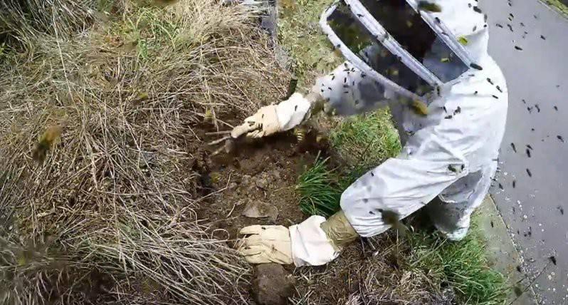 Как избавиться от ос и осиных гнезд на даче и в доме: лучшие средства для их уничтожения