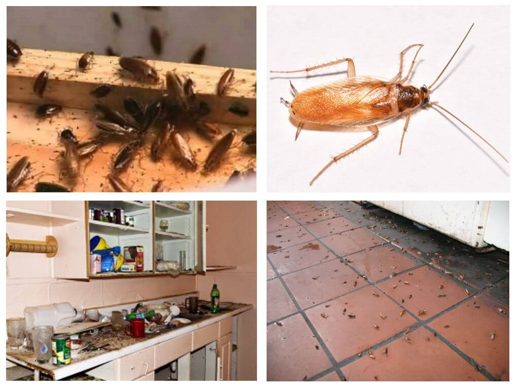 Как избавиться от запаха тараканов в квартире