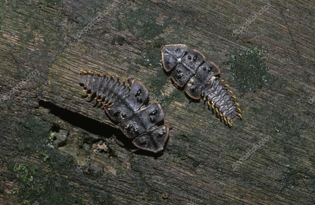 Жуки-гиганты и другие удивительные насекомые