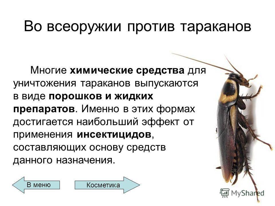Что едят тараканы в квартире и в природе