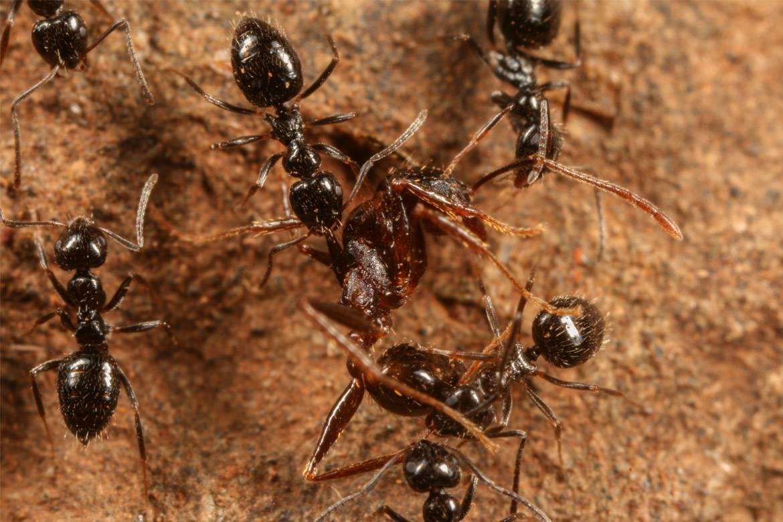 Что делать, если от соседей ползут тараканы? причины появления и борьба с ними