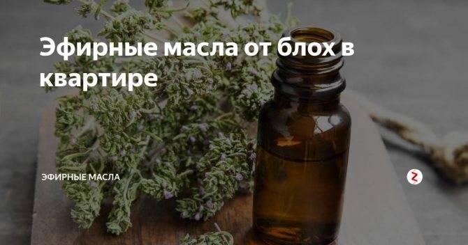 Какие эфирные масла отпугивают блох