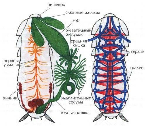 Чёрный таракан насекомое. описание, особенности, виды, образ жизни и среда обитания таракана