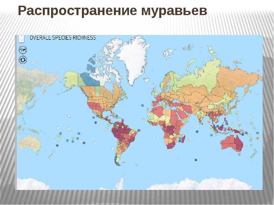 Самые распространенные виды лесных муравьев