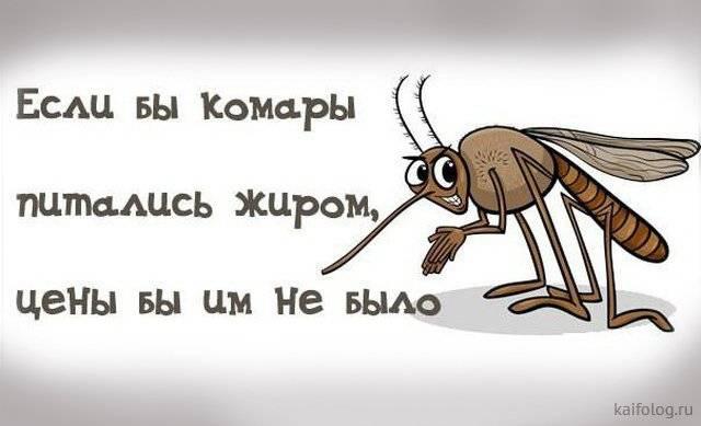 В какой стране нет комаров? почему у них нет комаров?