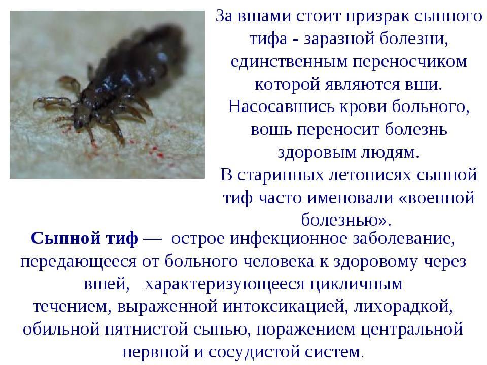 Живущие паразиты в волосах человека кроме вшей