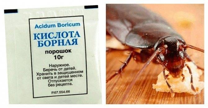 Борная кислота от тараканов в квартире: рецепты и способы применения отравы