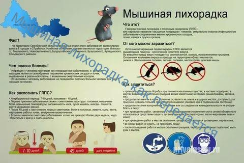 Мышинaя лихорaдкa — симптомы, лечение и профилактика