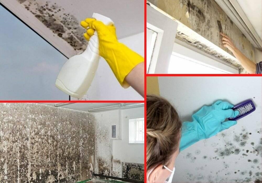 Как убрать плесень и грибок со стен в квартире: рекомендации