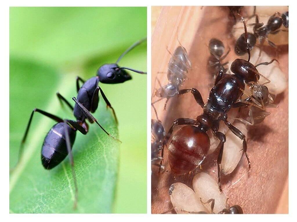 Сколько живут муравьи: их продолжительность жизни