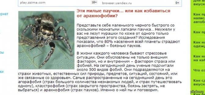 Борьба с боязнью пауков