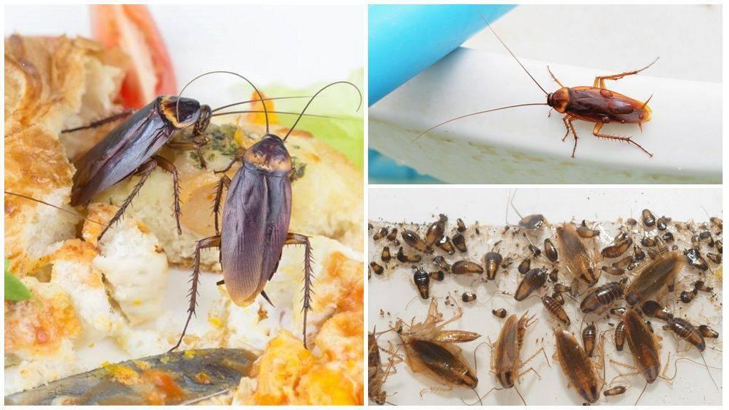Почему тараканов называют стасиками и какие ещё в народе есть названия?