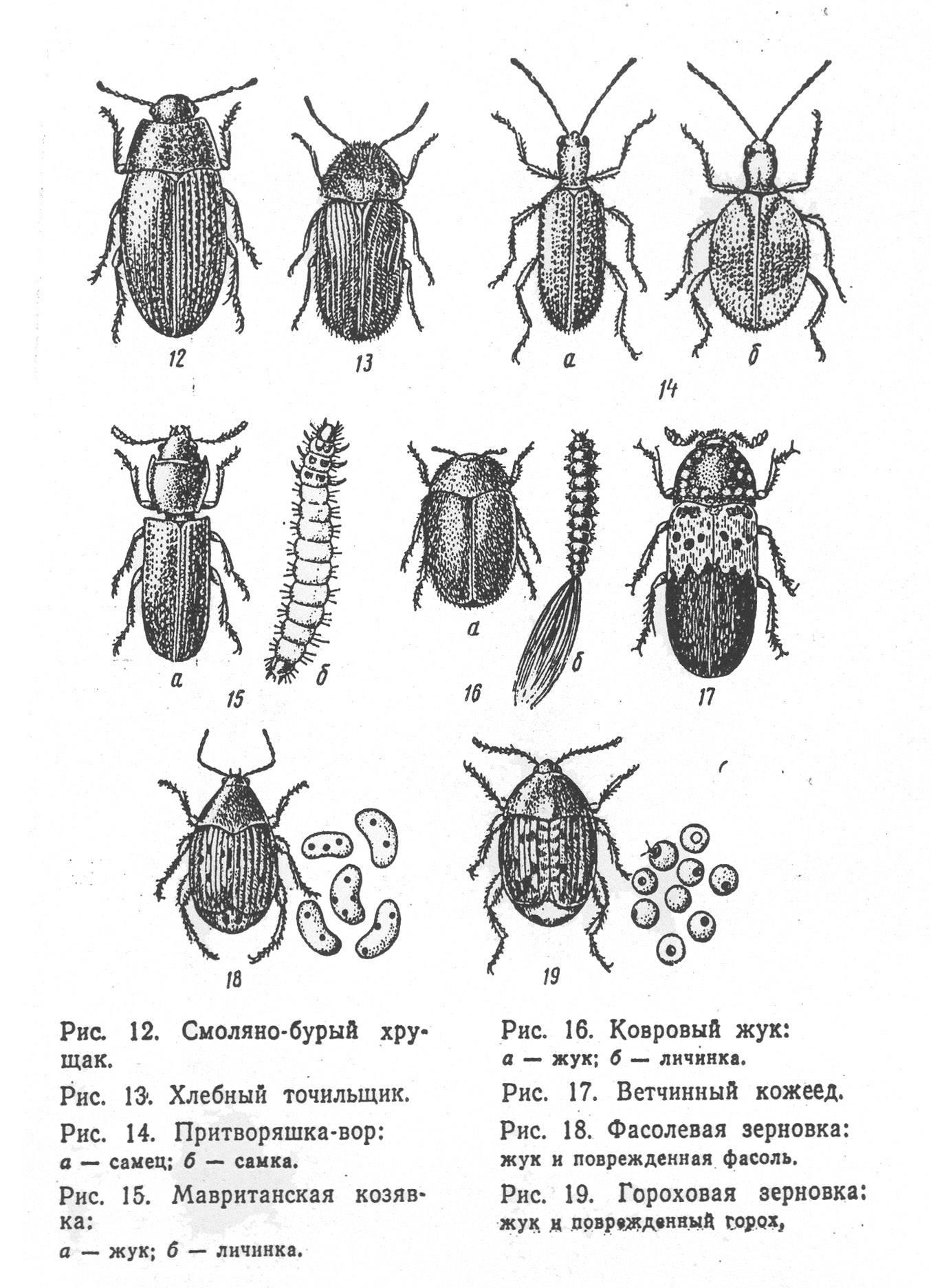 Как избавиться от жуков кожеедов в квартире: эффективные способы