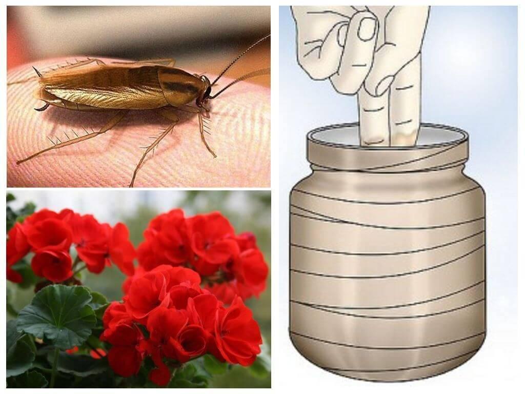 Все рецепты хороши: какие народные средства действительно помогают от тараканов?