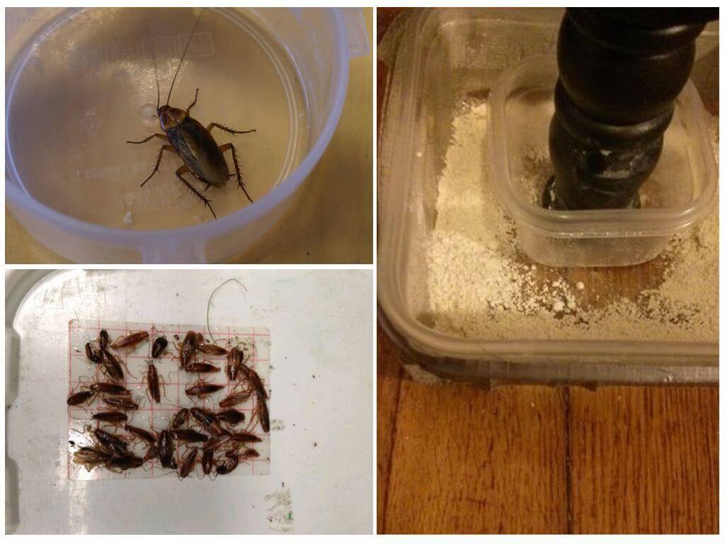 Самодельные ловушки для тараканов: как их делать и насколько это эффективно