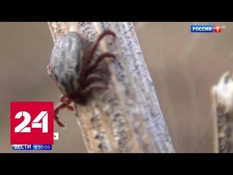 Лесные клещи: описание, опасность для человека, фото, укус клеща