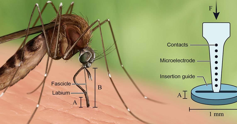 Класс насекомые. отряд двукрылые. комары. морфология. медицинское и эпидемиологическое значение комаров
