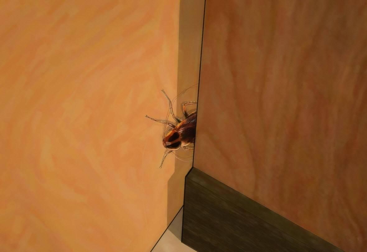 Есть ли гнезда у тараканов. где живут тараканы в доме, и как найти их гнездо - электрик