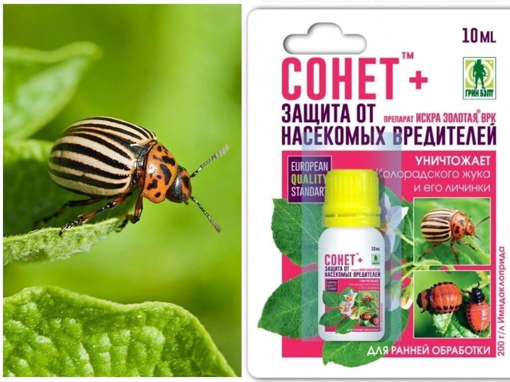 Регент от колорадского жука – инструкция по применению, цена, отзывы