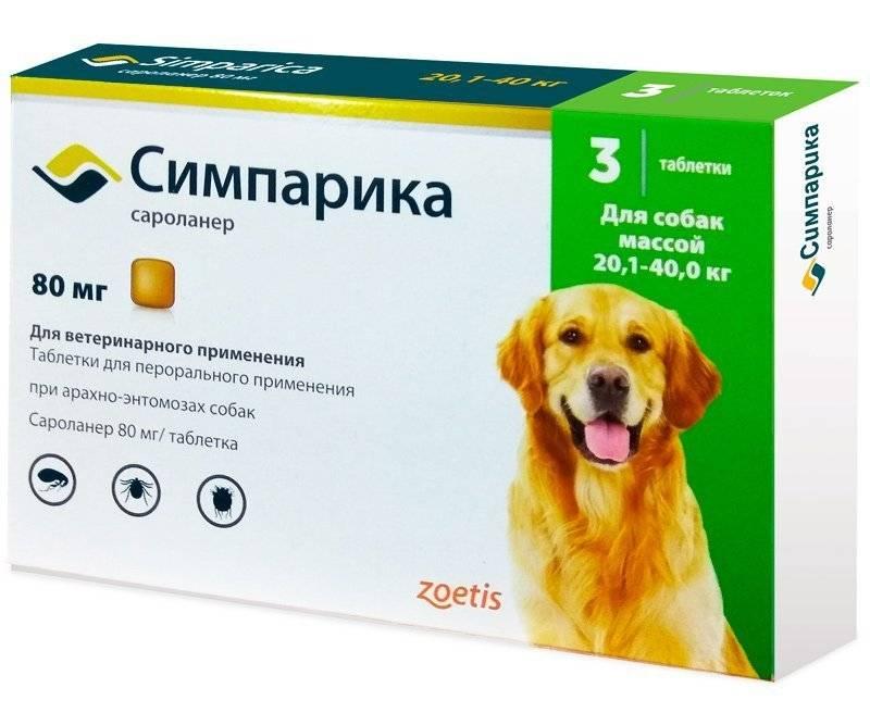 Таблетки от клещей для собак - преимущества и недостатки