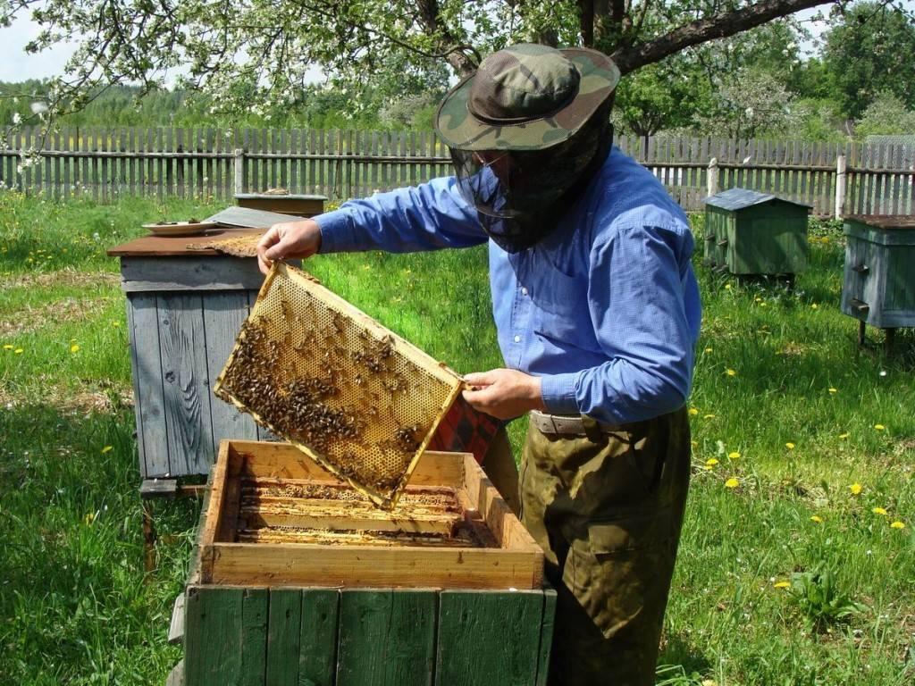 Как избавится от ос на пасеке | практическое пчеловодство