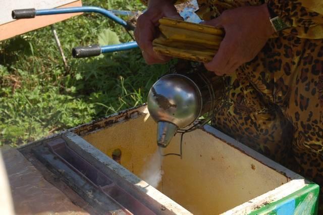 Обработка пчел осенью от клеща: лечение, препарат и как обрабатывать осенью и весной