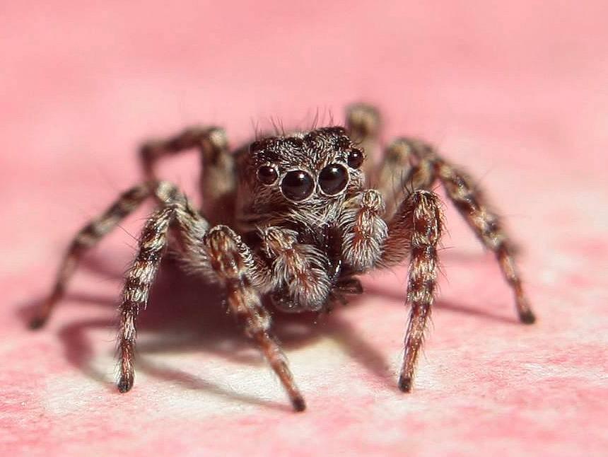 Погребной паук: насколько он опасен для человека и питомцев?