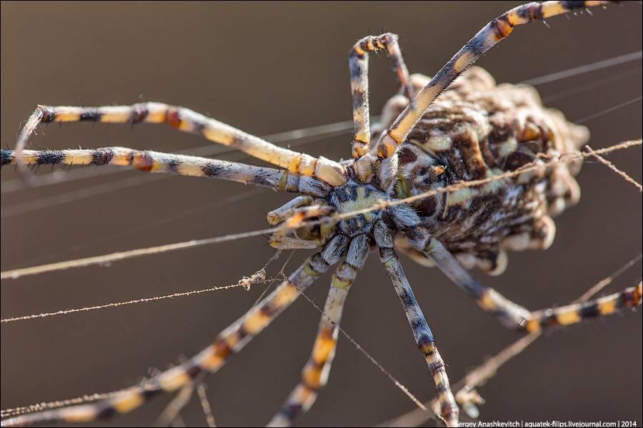 Опасные для человека пауки в крыму: каких стоит бояться