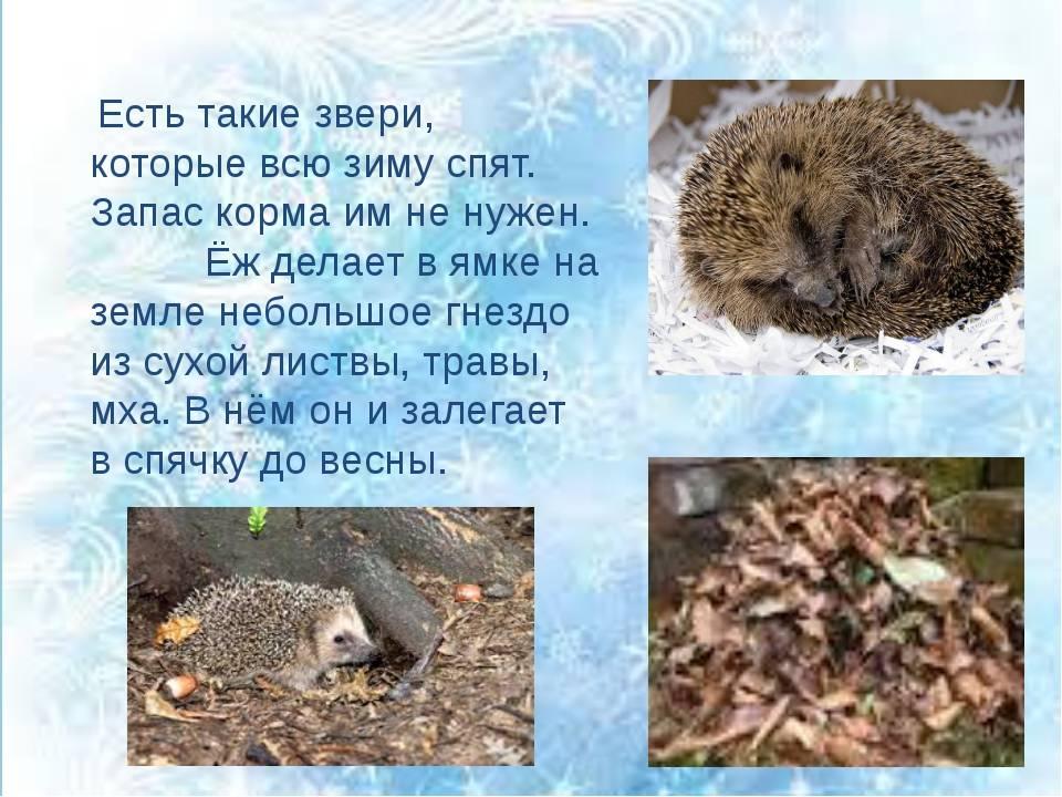 Как зверюшки готовятся к зиме?