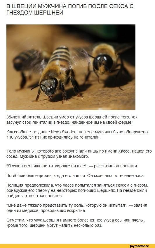 Когда и почему жалят пчелы. почему пчела умирает после укуса, извлечение пчелиного жала