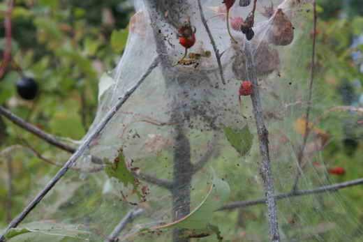 Как избавиться от паутины в квартире и на приусадебном участке