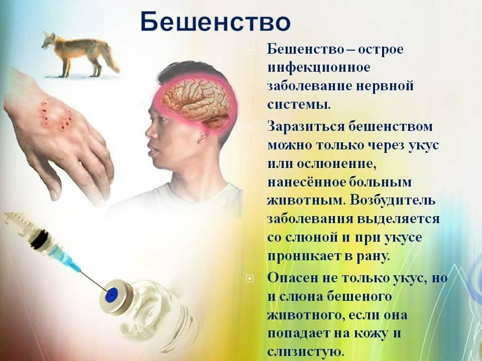 Какие болезни могут передавать крысы?